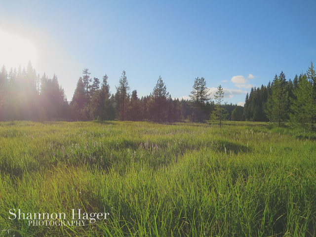 Shannon Hager Photography, Oregon Forest, Oregon Meadow