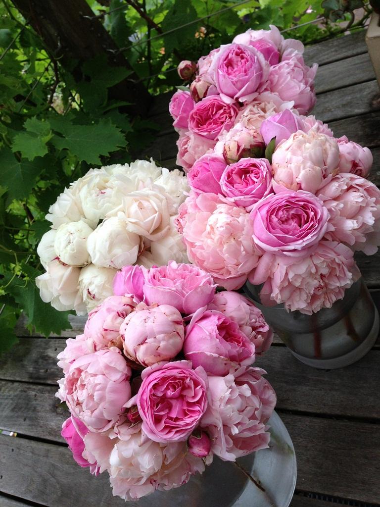 sugar bee flowers peonies david austins hydrangeas summer flower wedding crown casino. Black Bedroom Furniture Sets. Home Design Ideas