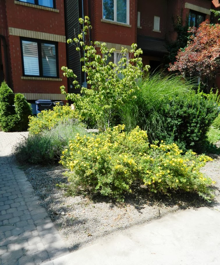 Toronto garden cleanup Paul Jung Gardening Services Leslieville front after