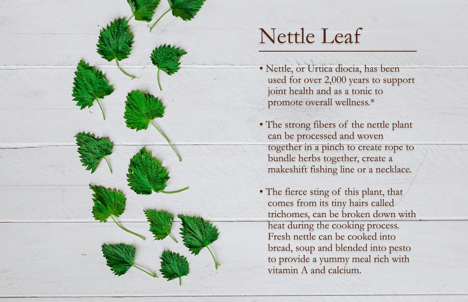 Nettle 101 from Traditional Medicinals
