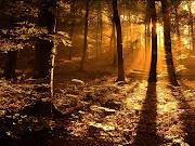Otoño, mágica estación que nos inunda los sentidos y nos desborda de belleza .