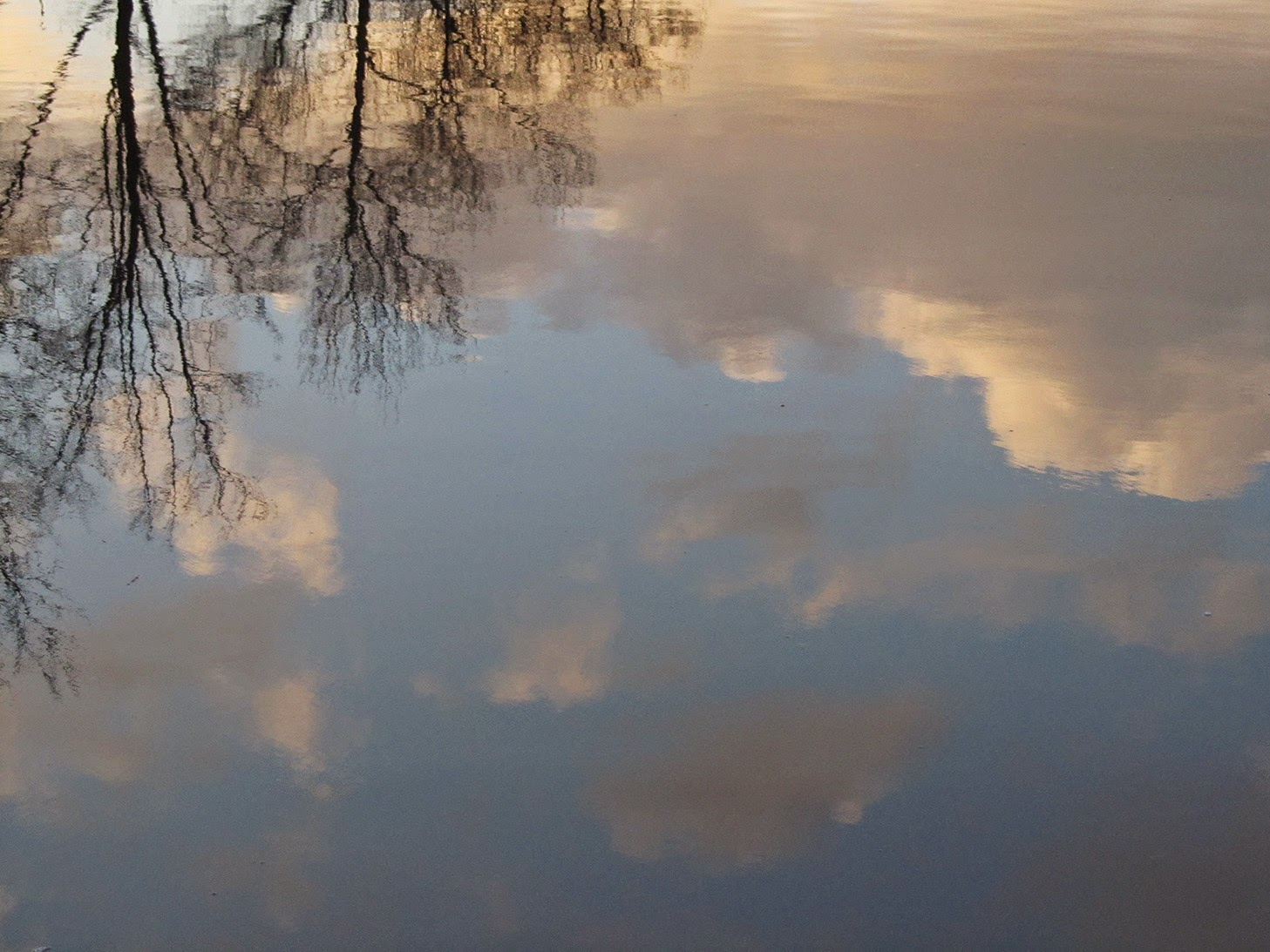 reflected clouds and trees in water
