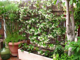 Huerto jardin ecologico plantas en la terraza - Plantas terraza mucho sol ...