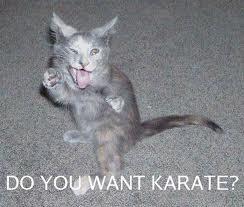 Gatos Shotokan
