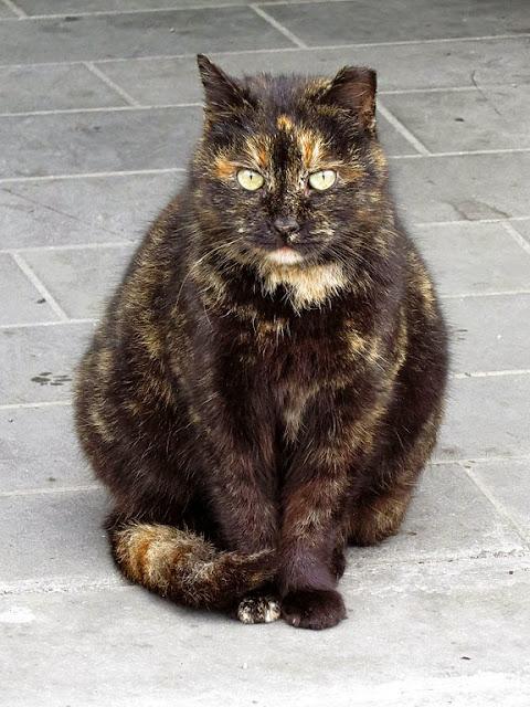 Cats, Scali delle Pietre, Livorno