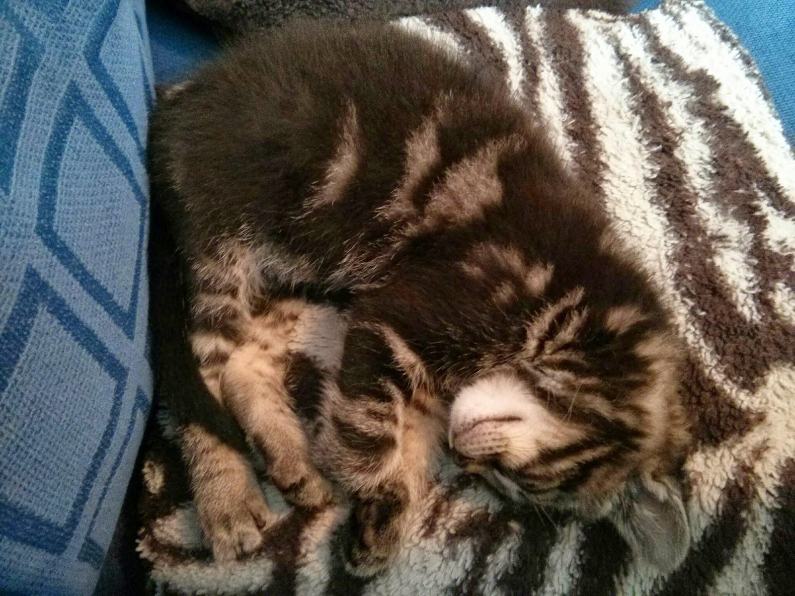Mario The Kitten sleeping