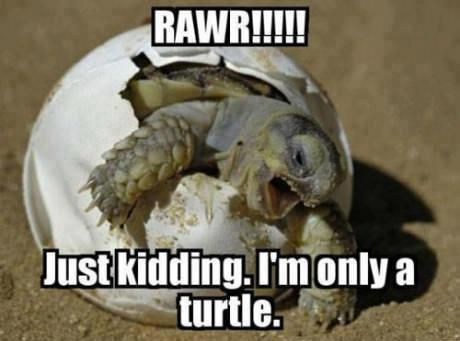 Rawr just kidding i m only a turtle