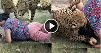 Woman Mauled By Cheetahs In South Africa