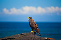 Galapagos Hawk, Typical galapagos Island weather