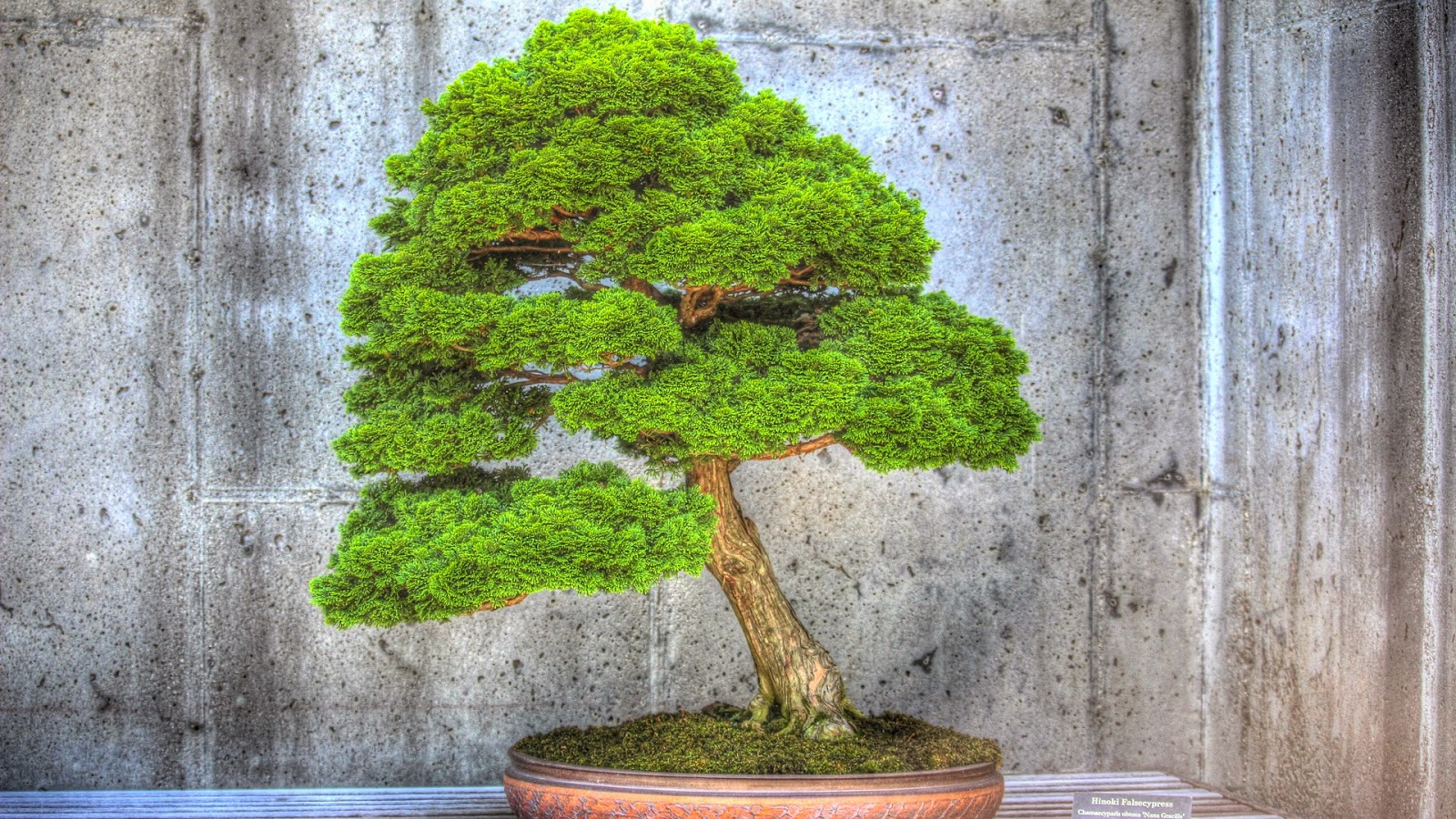 Bonsai Tree Garden North Carolina Arboretum