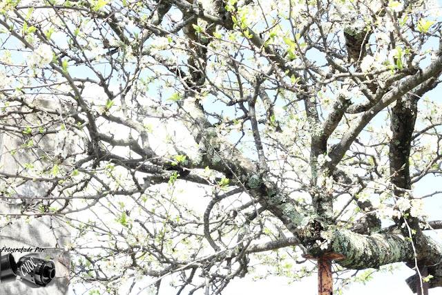 Fotografia com uma árvore que é suportada por uma lança, numa mistura de cores com uma luz branca.