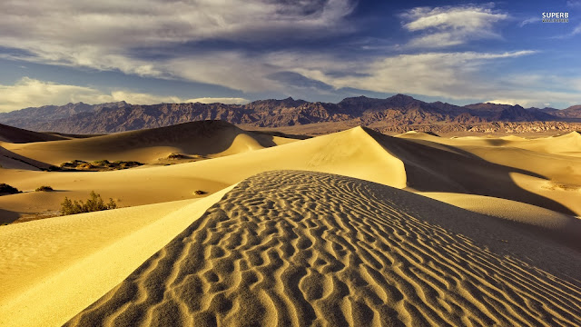 Golden Desert HD Wallpaper