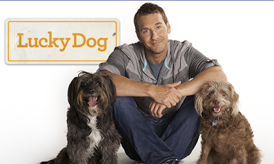 Lucky Dog Brandon McMillan on CBS