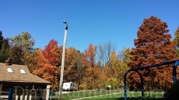 illinois campground fall colors