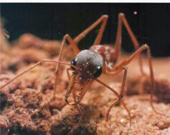 Serangga paling unik dan berbahaya