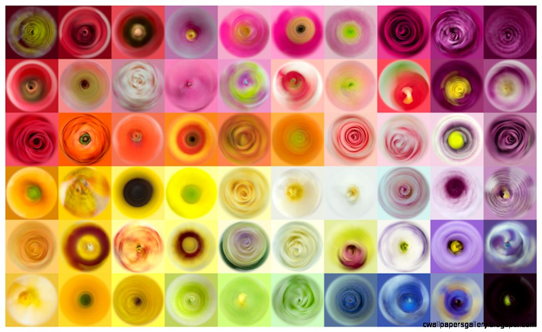 Fl Swirls  fqwimages
