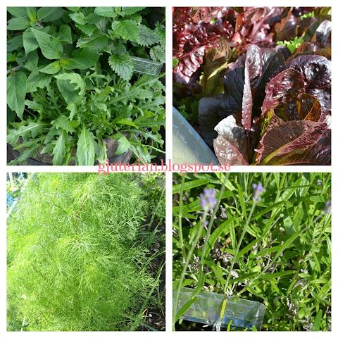 Grönsaksgrönt