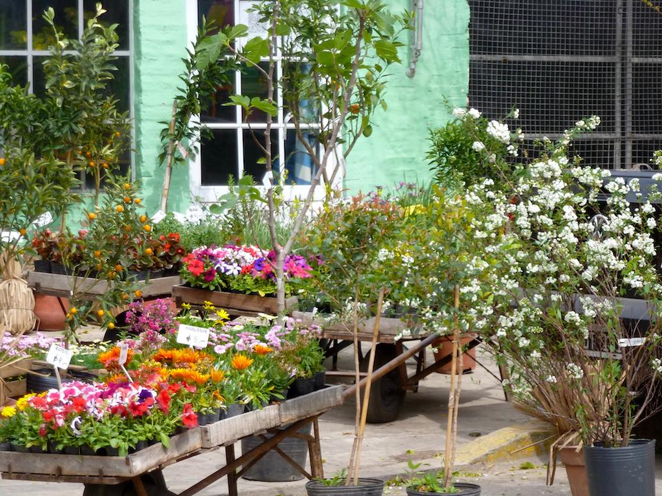 Amo buenos aires d a de la primavera d a de vivero for Viveros en capital