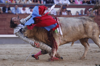 bullfight, gore, matador, world press