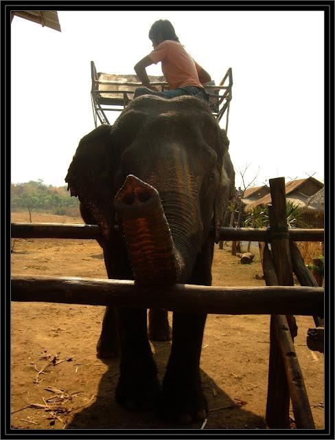 elephant trekking thailand