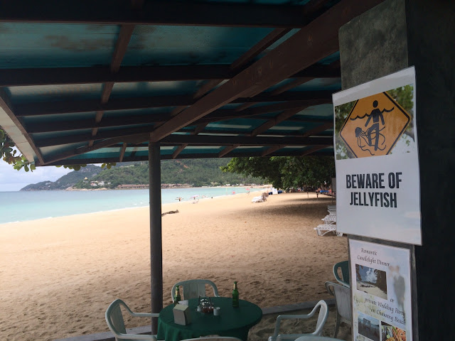 Tourists keep off the water in Samui - Weather situation Koh samui news weather today jelly fish at samui tourist dead