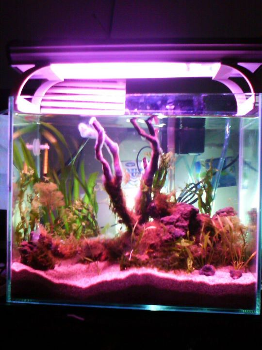 """Make Your Life More Meaningful: New Hobby..""""Aquascape ..."""