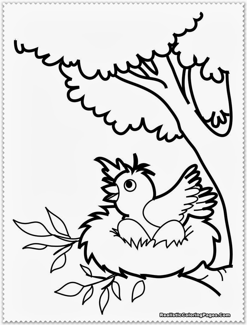 Bird Coloring Pages Realistic