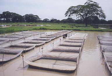Agriorissa Tilapia Fish Farming