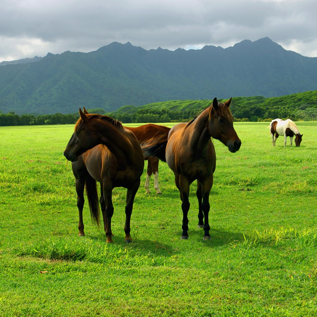 horses wallpaper free download - DriverLayer Search Engine