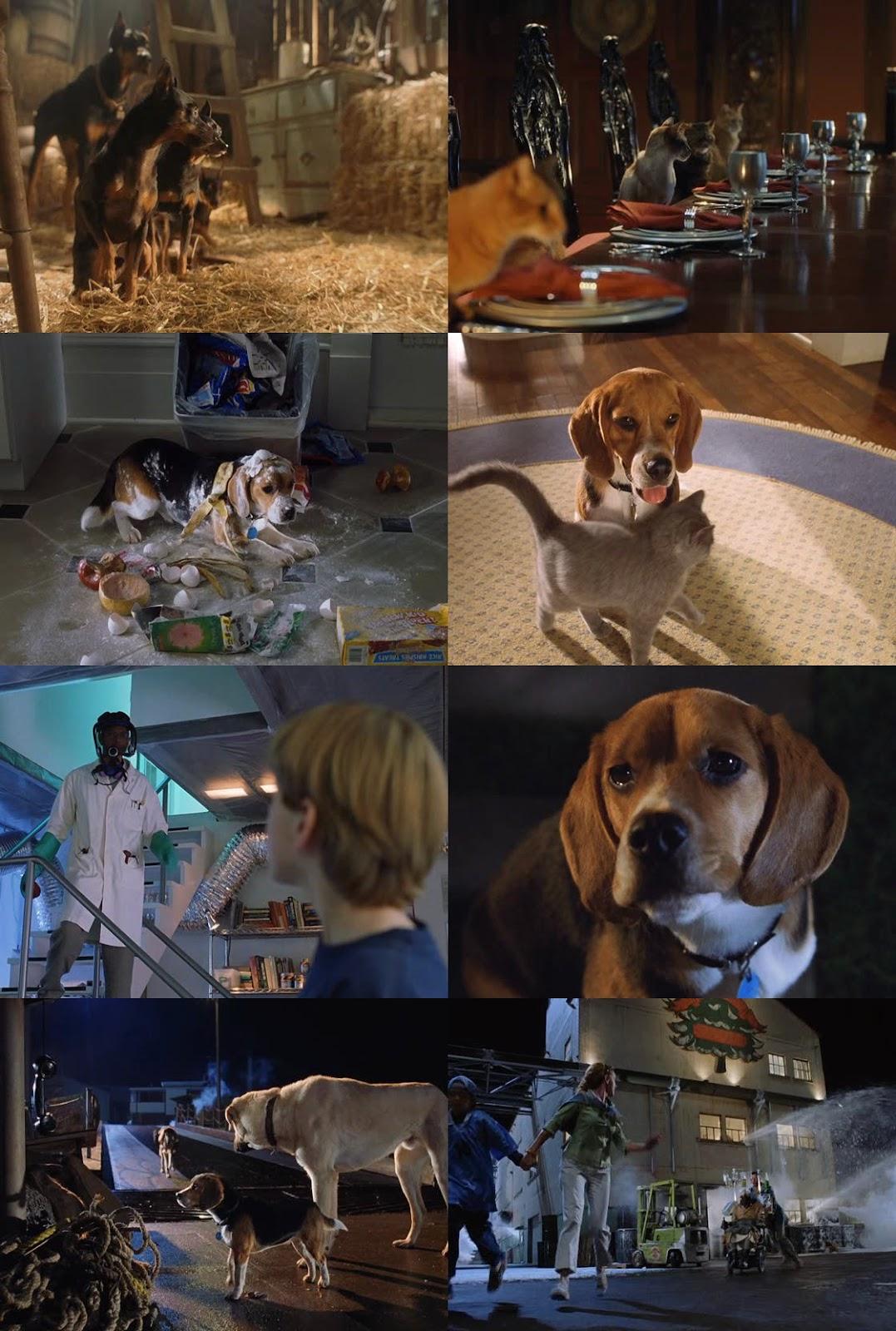 Como Perros y Gatos 1080p Latino