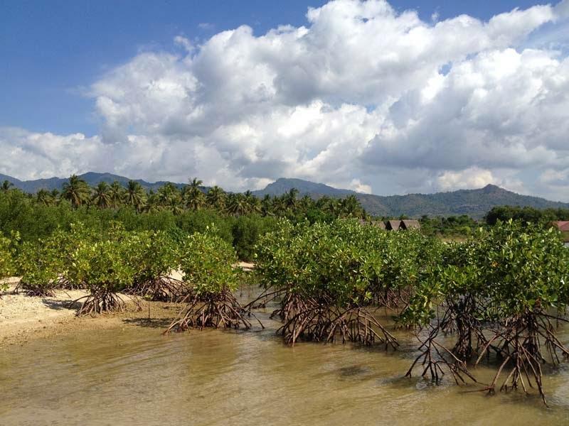 View Tanaman Bakau