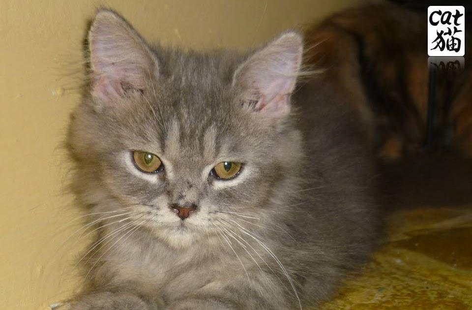 Kucing Utara Botol Susu Amp Susu Untuk Kucing