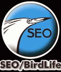Web de SEO/Birdlife