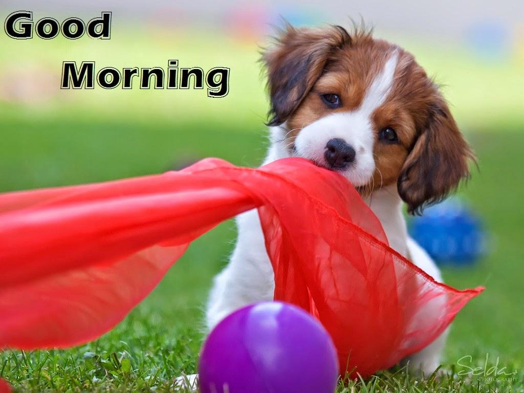 Good Morning On Facebook : Funny good morning facebook images download festival chaska
