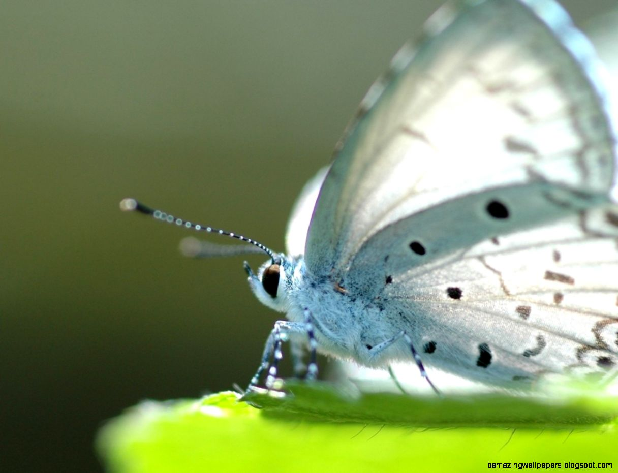 White butterfly animals insects macro High Quality and Resolution