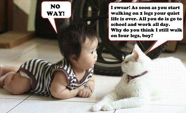 Epic Cat - Why Do You Think I Still Walk On Four Legs - Seems Legit