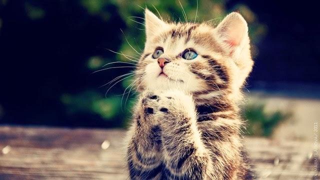 hình nền mèoc on cực kỳ đáng yêu
