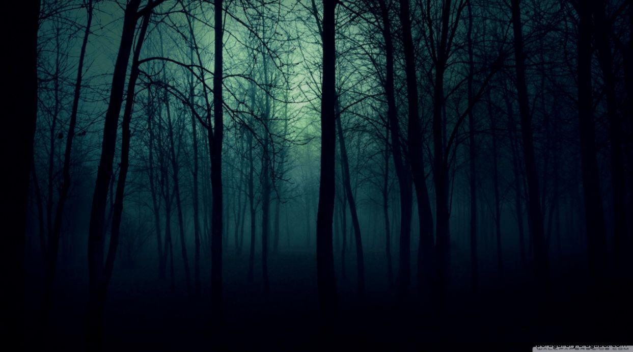 Dark Forest HD desktop wallpaper  High Definition  Fullscreen
