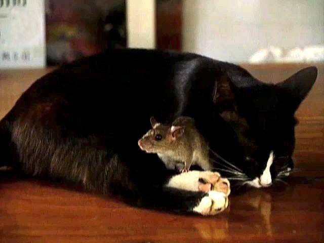Libri cultura recensione storia di un gatto e del topo for 1 1 2 casa di storia