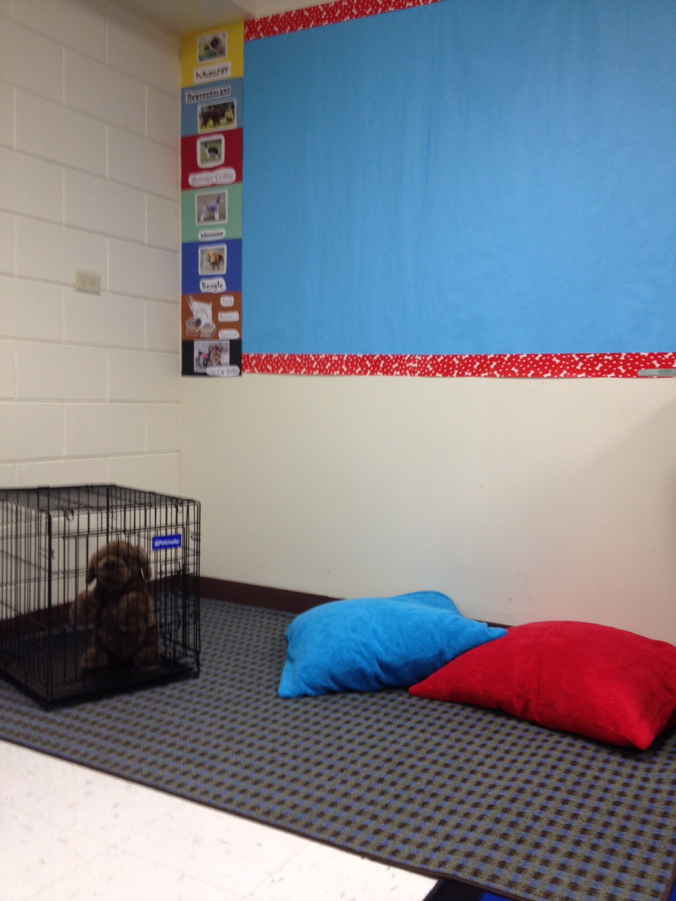 And how are the children dog theme classroom reading corner for Classroom floor