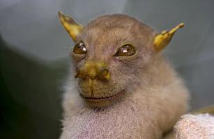 2010 十大新物種 - 6.管鼻果蝠