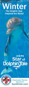 AMAZING Dolphin Tale