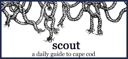Scout: A Daily Guide to Cape Cod