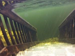 Schnorcheln, Tauchen im Troy Springs State Park FL