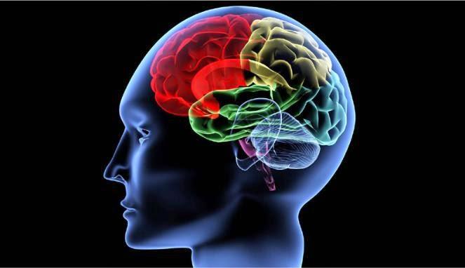 Pada Usia Berapa Kemampuan Otak Menurun?