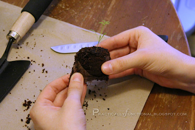 "Removing the ""skin"" from the seedling pellet"
