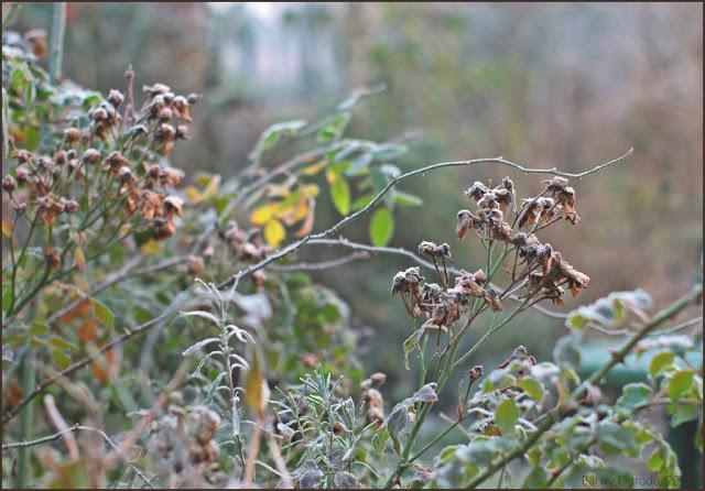 blog ogrodowy