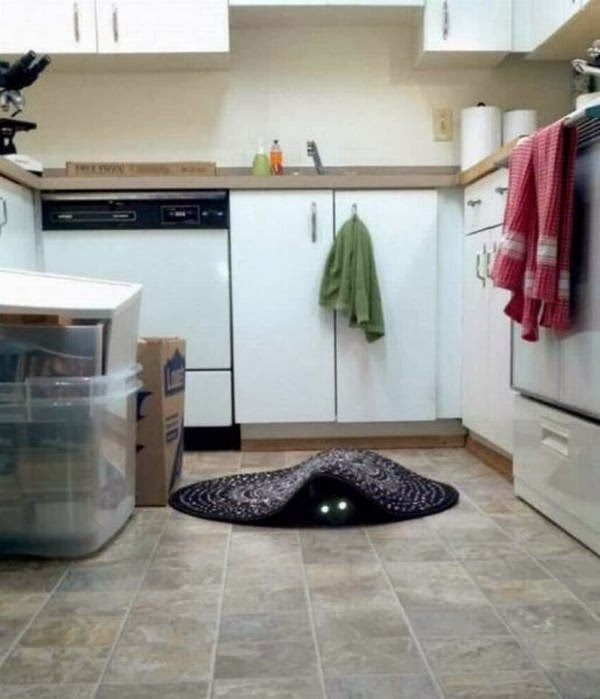 Funny cats - part 91 (40 pics + 10 gifs), cat hides under a rug