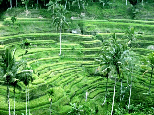 things to do in bali 9c