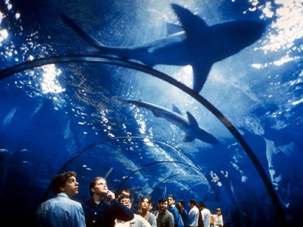 Alentours barcelone l aquarium de barcelone for Aquarium de barcelona